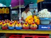 Flowers India (9)